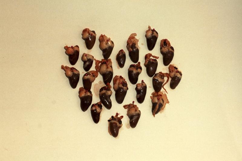 Serca na Walentynki