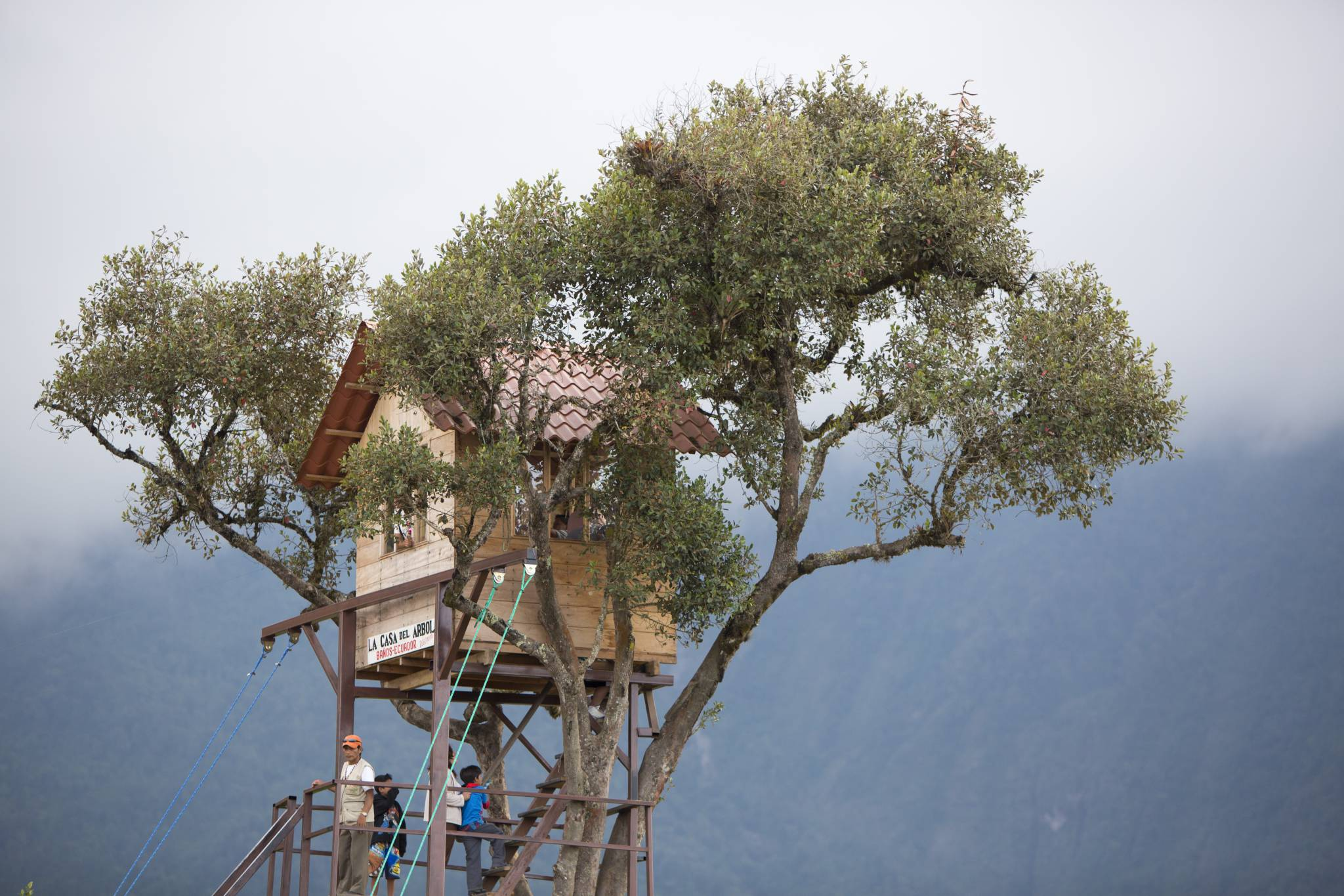 Domki na drzewie