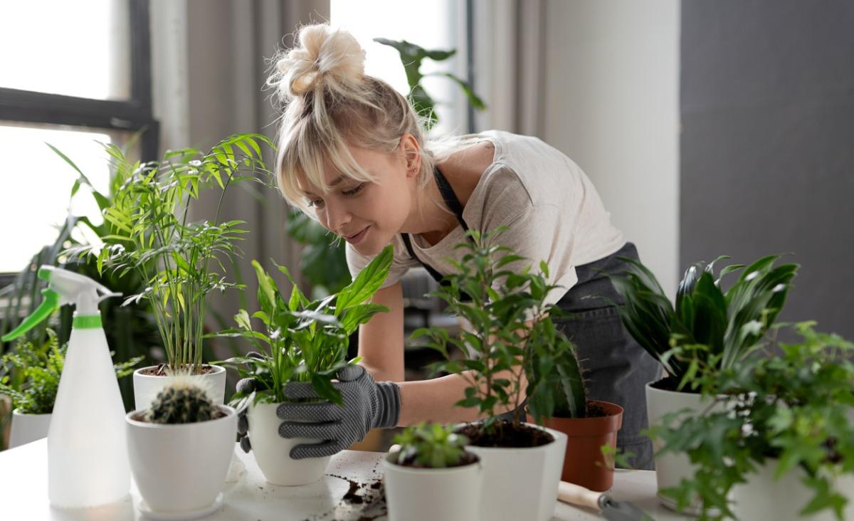 Wokas - aplikacja mobilna ułatwiająca codzienną opiekę nad roślinami