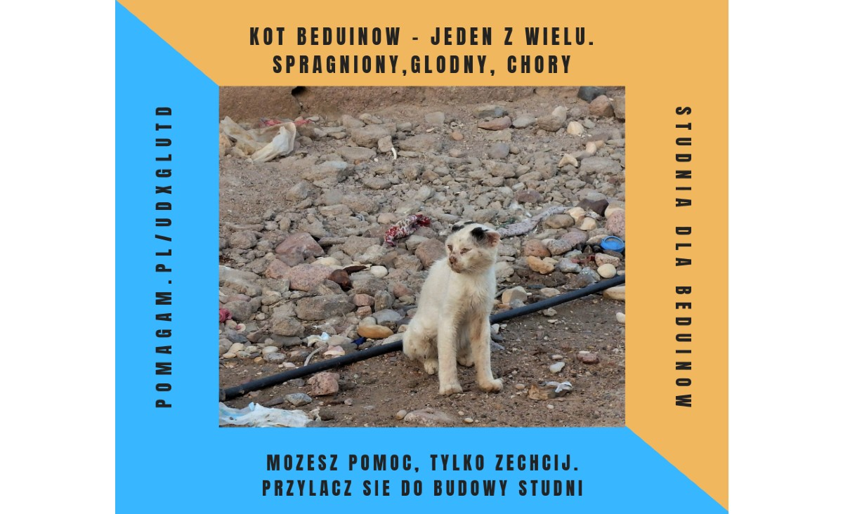 Woda dla Beduinów - zamieńmy pustynię w ogród