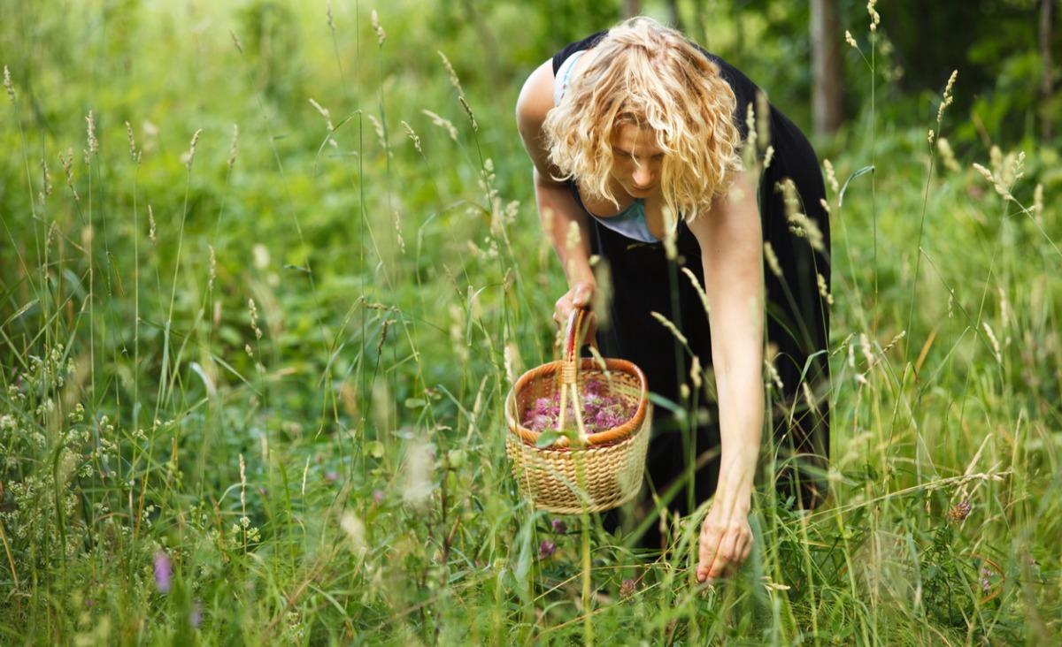 Roślinna alchemia, czyli jakie właściwości mają zioła lecznicze?
