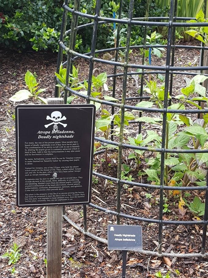 Poison Garden - ogród, w którym rośliny rosną w klatkach
