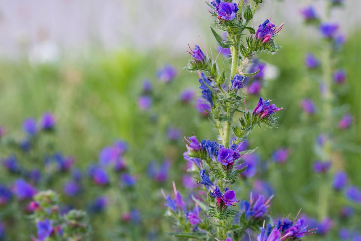 Rośliny miododajne: co warto sadzić na balkonach i w ogrodach?
