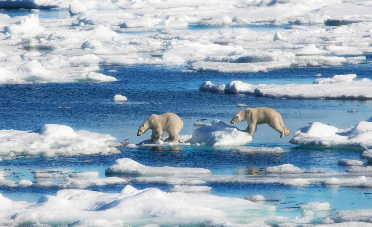 """""""From Zero to Planet Hero"""" - wyzwanie WWF dla wspólnego ratowania planety"""