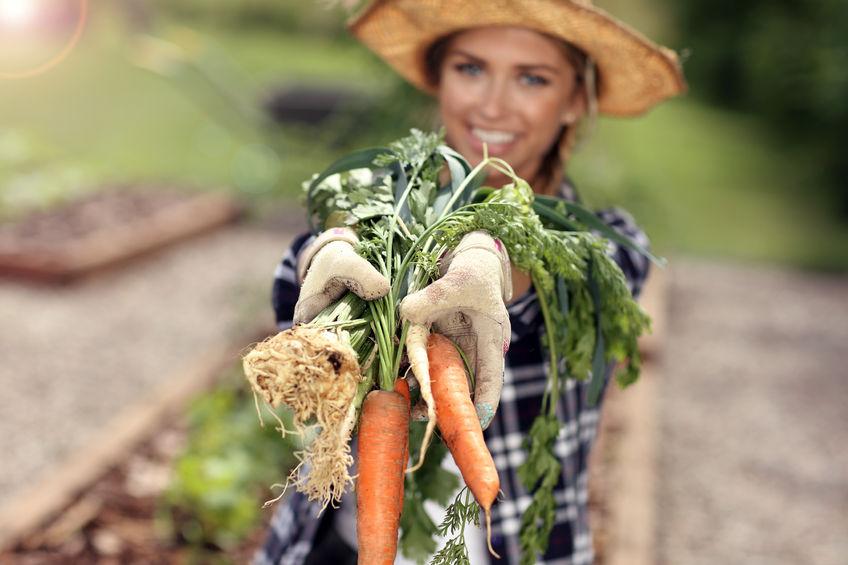 Zdrowe warzywa korzeniowe w jesiennej diecie