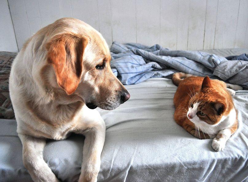 Poradnik dla wlascicieli psow i kotow