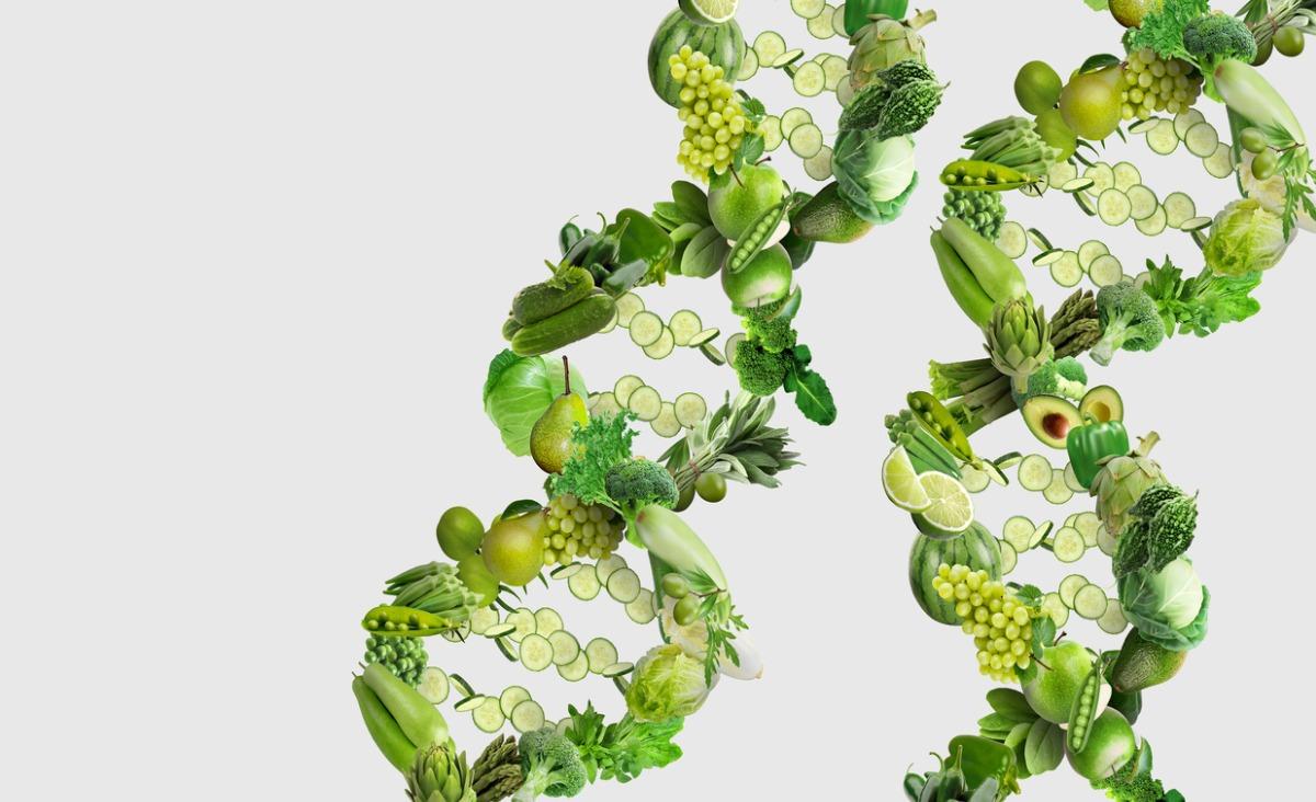 GMO – czy jest się czego bać?