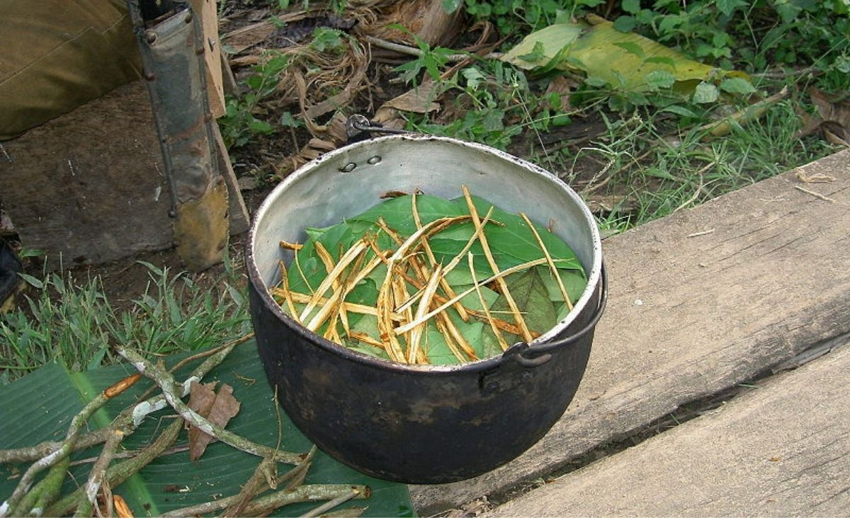 Kontrowersyjna ayahuasca