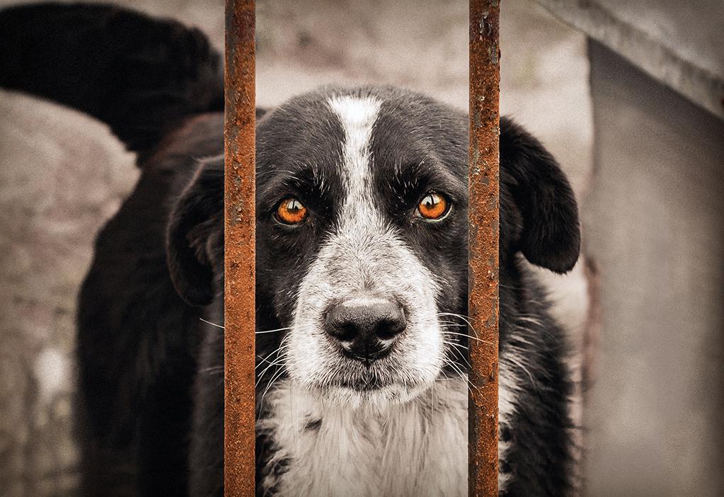 Zamiast urzędowi, oddaj zwierzakowi! Przekaż 1% swojego podatku na rzecz zwierząt będących pod opieką fundacji Viva!
