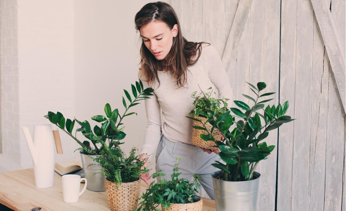 Liściaste szczęście - dlaczego warto wypełnić domową przestrzeń zielenią?