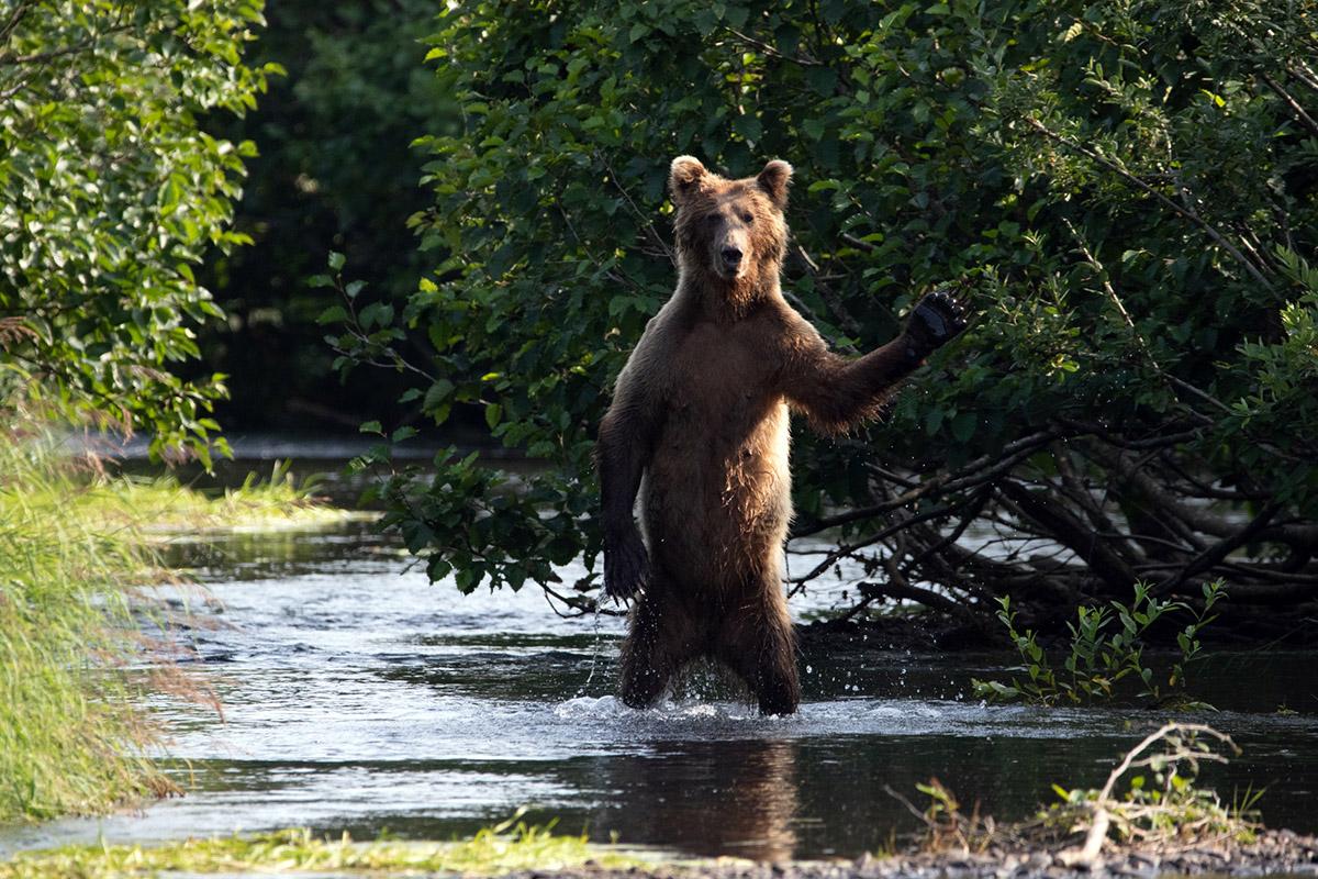 Najśmieszniejsze zdjęcia dzikich zwierząt- prace finalistów Comedy Wildlife Photography Awards 2020
