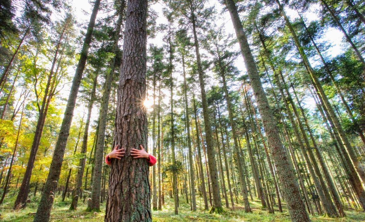 Ścieżki zdrowia - krótkie wprowadzenie do terapii leśnej