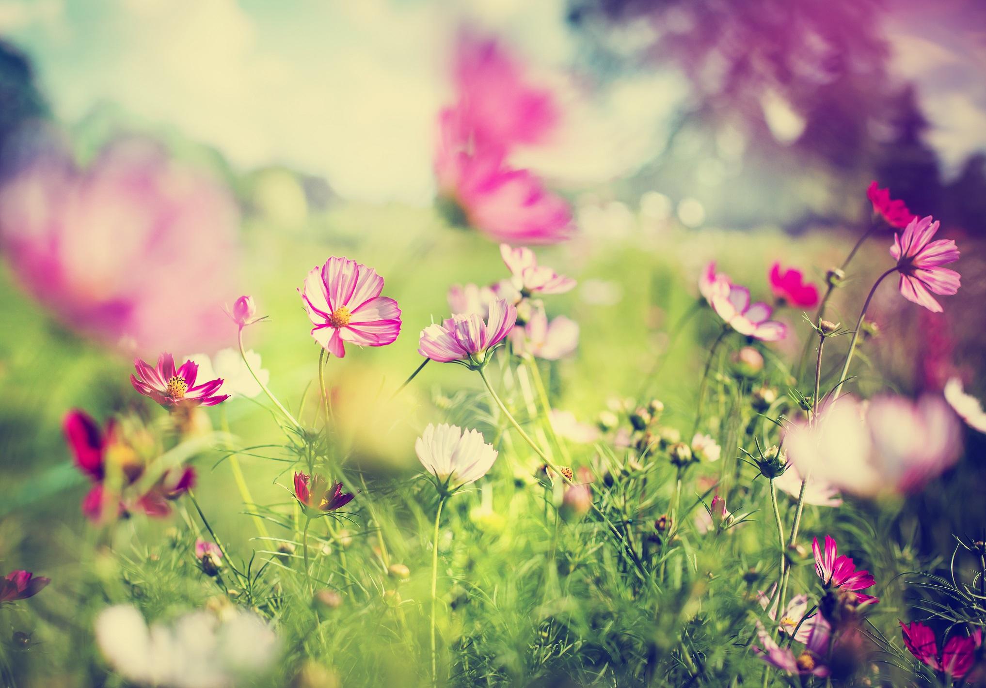 9_Wiosenna alergia - jak sobie pomóc