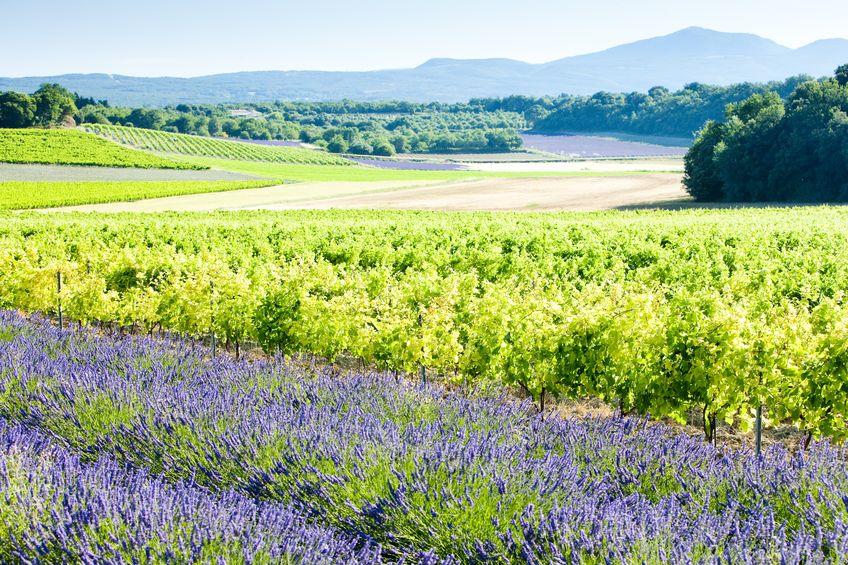 Top 10 Wine Destinations in Europe