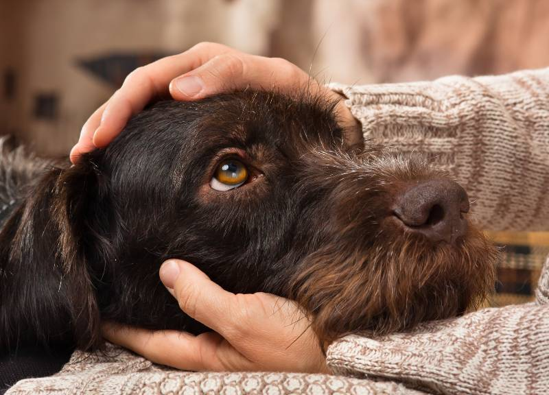 psy podobne do właścicieli