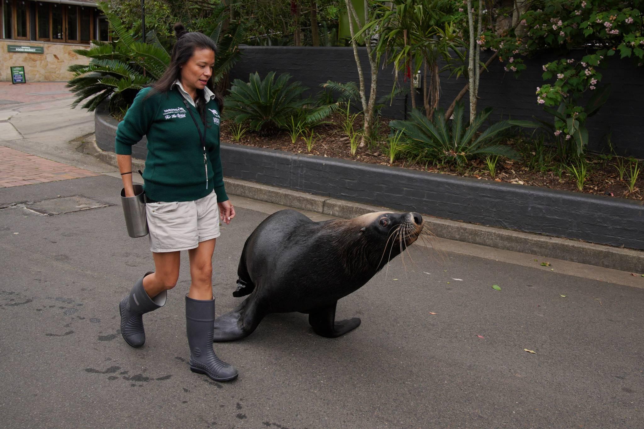 Przyroda budzi się do życia - piękne zdjęcia zwierząt w największych miastach na świecie
