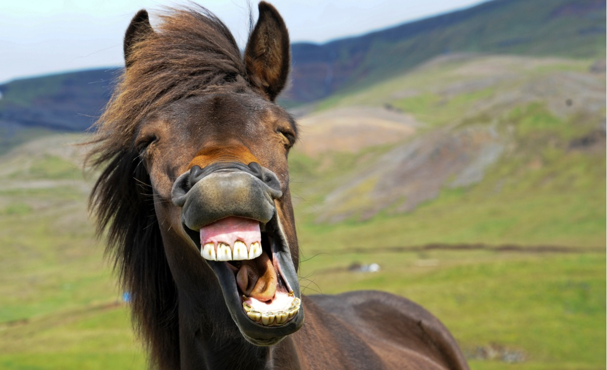 Humor w życiu. Jak uruchomić pozytywne emocje?