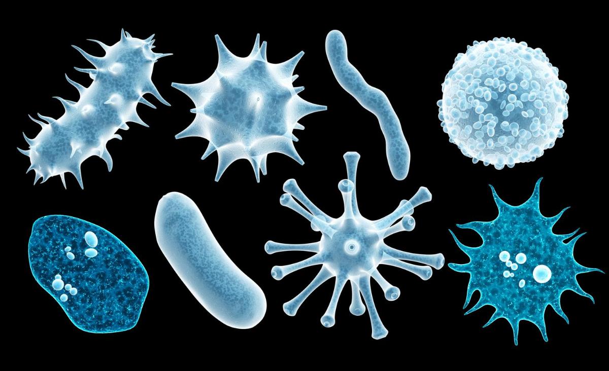 Infekcja wirusowa czy infekcja bakteryjna?