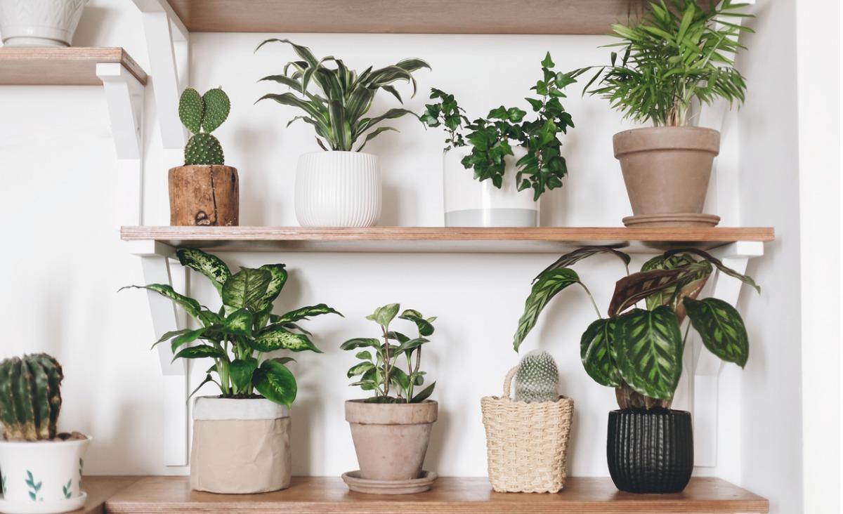6 roślin, które wzmacniają, przedłużają, a nawet ratują życie