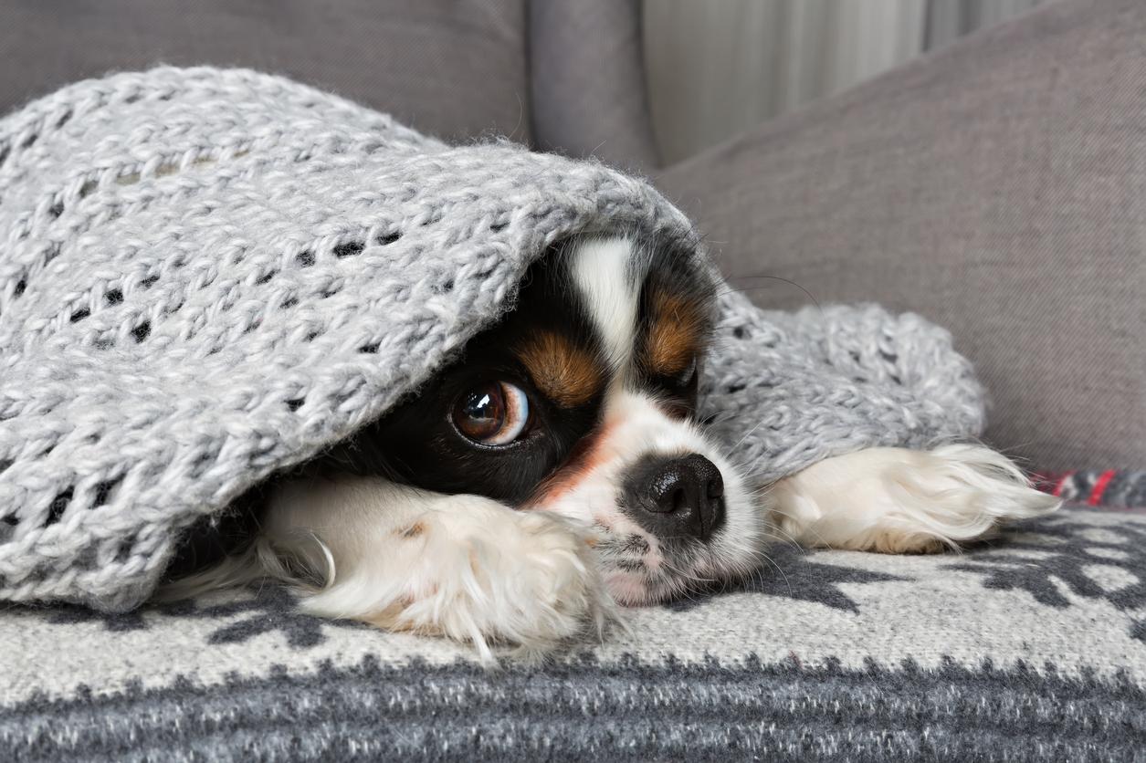 Jak poradzić sobie z chorym psem ?