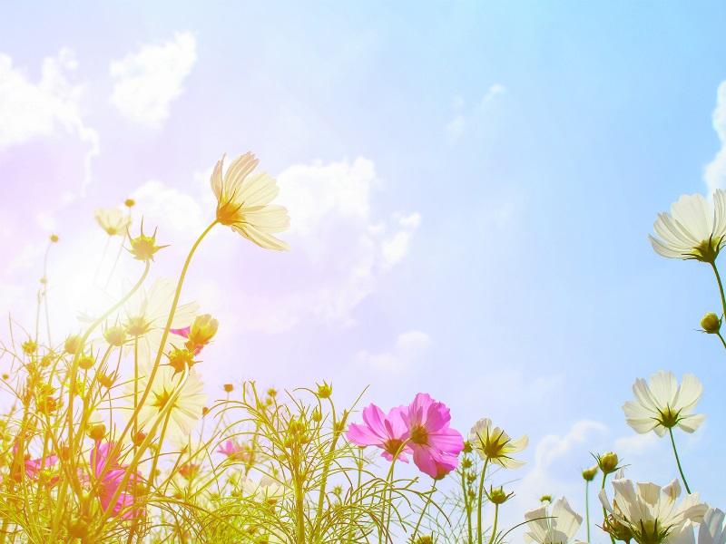 Nie daj się alergii na wiosnę