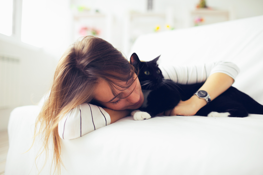 Cats_zwierciadlo.pl