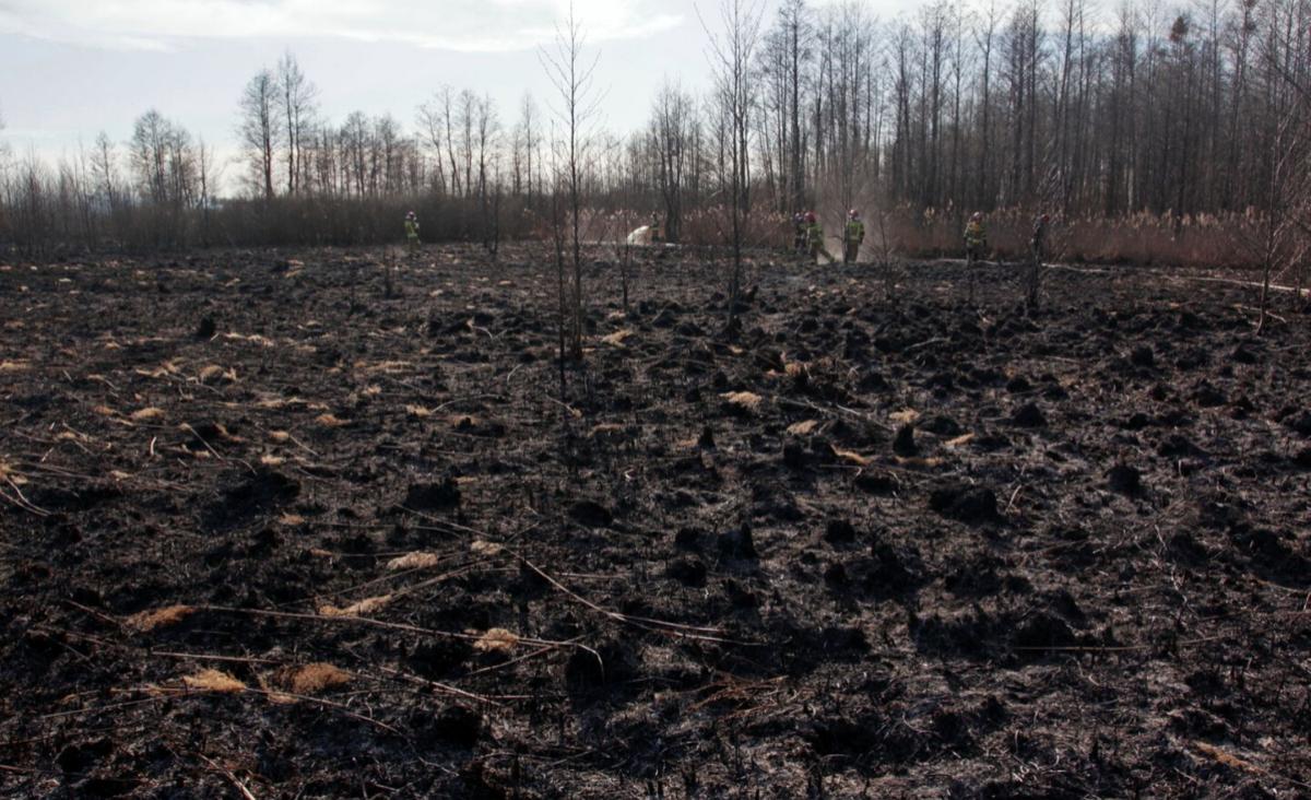 Biebrzański Park Narodowy po pożarze. Jak wygląda proces odnowy?